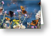 No People Greeting Cards - Butterflies Sitting On Flower Greeting Card by www.WM ArtPhoto.se