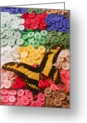 Disks Greeting Cards - Butterfly and buttons Greeting Card by Garry Gay