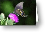 Thistle Greeting Cards - Butterfly and Thistle Greeting Card by Jeff Kolker