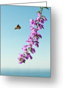 Clear Photo Greeting Cards - Butterfly Greeting Card by Arnaud Bertrande