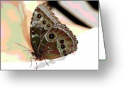 Designers Choice Digital Art Greeting Cards - Butterfly Art Greeting Card by Don Wright