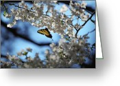 Dogwood Blossom Greeting Cards - Butterfly Blossom Greeting Card by Nathan Grisham
