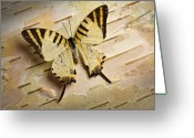 Butterfly Greeting Cards - Butterfly Covered in Dew drops Greeting Card by Bob Orsillo