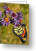 Diane Berry Digital Art Greeting Cards - Butterfly Delight Greeting Card by Diane E Berry