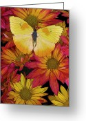 Colorful Photography Painting Greeting Cards - Butterfly Detail Greeting Card by JQ Licensing