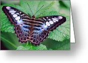 Fine Home Art And Theater Greeting Cards - Butterfly Greeting Card by Don  Wright
