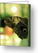 Chaos Theory Greeting Cards - Butterfly Effect on Green World Greeting Card by Viktor Savchenko