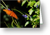 Flowers Miami Greeting Cards - Butterfly Greeting Card by Harry Spitz