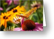 Cone Flower Greeting Cards - Butterfly in Paradise Greeting Card by Bill  Wakeley