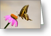 Animals Greeting Cards - Butterfly Greeting Card by Kimberly Gonzales