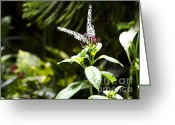 Beauty Mark Greeting Cards - Butterfly Kisses Greeting Card by Leslie Leda