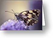 Natural Pattern Greeting Cards - Butterfly Greeting Card by MariClick Photography