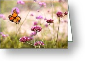Flying Greeting Cards - Butterfly - Monarach - The sweet life Greeting Card by Mike Savad