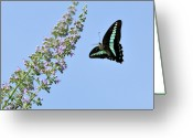 Clear Photo Greeting Cards - Butterfly Greeting Card by Myu-myu