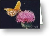 Happy Texas Artist Greeting Cards - Butterfly on Bull Thistle Greeting Card by Fred Jinkins