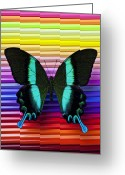 Wings Photo Greeting Cards - Butterfly on colored pencils Greeting Card by Garry Gay
