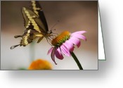 Animals Greeting Cards - Butterfly on Flower Greeting Card by Kimberly Gonzales