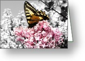 Gray-scale Greeting Cards - Butterfly on Lilac Greeting Card by Mellisa Ward