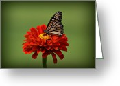 Sandy Keeton Greeting Cards - Butterfly on Zinnia Greeting Card by Sandy Keeton