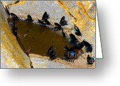 Thirsty Greeting Cards - Butterfly Pool Greeting Card by David Lee Thompson