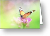 Natural Pattern Greeting Cards - Butterfly Rainbow Greeting Card by Sharon Lapkin