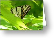 Vibrent Colored Landscape Greeting Cards - Butterfly Rest In The Leaves Greeting Card by Debra     Vatalaro