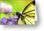 Feeding Greeting Cards - Butterfly Greeting Card by Sebastian Musial