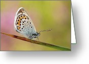 Natural Pattern Greeting Cards - Butterfly Greeting Card by Stefady