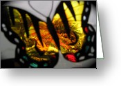 Vibrent Colored Landscape Greeting Cards - Butterfly Wings  Collection  B Greeting Card by Debra     Vatalaro