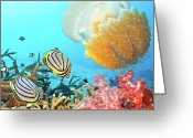 Sea Animal Greeting Cards - Butterflyfishes and jellyfish Greeting Card by MotHaiBaPhoto Prints