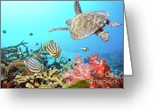 Coral Reef Greeting Cards - Butterflyfishes and turtle Greeting Card by MotHaiBaPhoto Prints