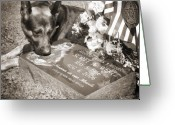 Dog Portrait Greeting Cards - Buy a print. Show your support for Reading K9 Police.  Willow Street Pictures.  Greeting Card by Darren Modricker