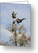 Buzzard Wings Greeting Cards - Buzzard Wings Greeting Card by Warren Thompson