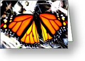 Monarchs Greeting Cards - Buzzed Greeting Card by Emily Stauring