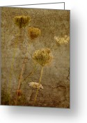 Wildflower Fine Art Greeting Cards - By the River Greeting Card by Bonnie Bruno