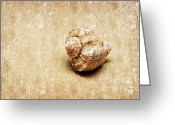 Shell Texture Greeting Cards - By The Sea Painterly Greeting Card by Andee Photography