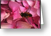 Prestigeclass Greeting Cards - Bzzzzzzzzzzz Greeting Card by Rachel-Avalon Brightside