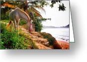 Caballo Greeting Cards - Caballo Blanco Greeting Card by Skip Hunt
