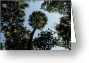 Cabbage Palm Trees Greeting Cards - Cabbage Palm against the Sky Greeting Card by Theresa Willingham