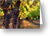Fall Photographs Greeting Cards - Cabernet Afternoon Greeting Card by Mars Lasar