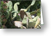 Plants Greeting Cards - Cacti in Bloom Greeting Card by Enzie Shahmiri
