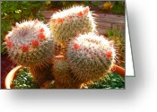 Cactus Flower Digital Art Greeting Cards - Cactus Buds Greeting Card by Amy Vangsgard