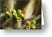 Cactus Flower Digital Art Greeting Cards - Cactus Buds Greeting Card by Methune Hively