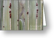 Flower Buds Greeting Cards - Cactus Buds Greeting Card by Rebecca Margraf