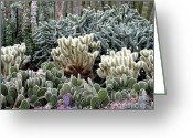 Spine Greeting Cards - Cactus field Greeting Card by Rebecca Margraf