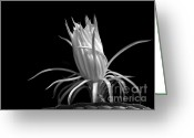 Hawaiian Pond Greeting Cards - Cactus Flower Greeting Card by Sabrina L Ryan
