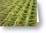 Thorn Greeting Cards - Cactus Greeting Card by Oscar Martn