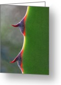 Crete Greeting Cards - Cactus Greeting Card by Patricia Fenn Gallery