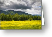 Buttercups Greeting Cards - Cades Cove Great Smoky Mountains National Park TN - Fields of Gold Greeting Card by Dave Allen