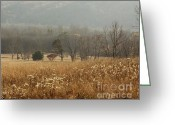 Cove Framed Prints Posters Greeting Cards - Cades Cove November Greeting Card by Susan Buczak